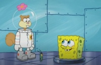 die chemie stimmt spongebob